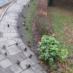 The ducks below our window