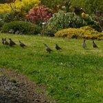Quail in the garden
