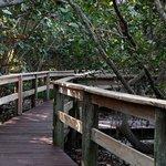 Mangrove Bridge