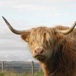 highland neighbor