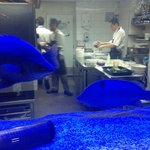 """Chefs and """"blue"""" fish at work"""