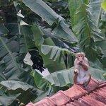 Natur pur - Kleines äffchen auf dem Vordach