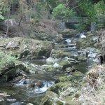Shimna river walk