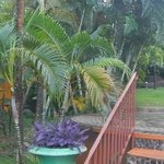 Panorama of the entrance view from the Creole property up towards the hotel