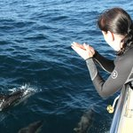 we encountered over 100 dolphin