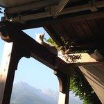 Il  suo  gatto  prende  il  sole!!