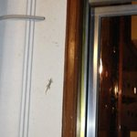 everywhere lizards... fortunately not inside of the hotel!!