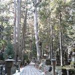 serene tree lined path