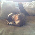 ソファの一番いい場所をネコに取られました。。。