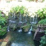 view from quetzal buffet