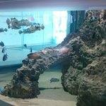 Entrance fish tank