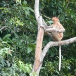Long tailed macaque on the river