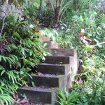 steps leading to lumbung