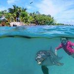 Dolphin Swim & Snorkel