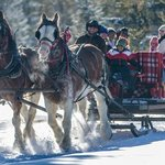 Our medium sleigh, seats 10-12. Available for private groups.