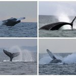 You want whales... book Red Dolphin Charters
