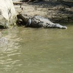 Crocodiles lazing on the shore during boat tour arranged by Bella