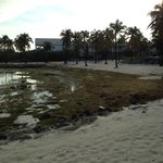 """Thick, smelly seaweed clogs the """"swimming beach"""""""