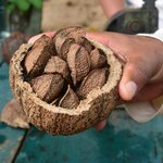 Learning about Brazil nuts