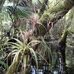 Typical Swamp Walk scene