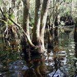 Swamp Walk view