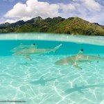 Black tip sharks ans sting rays
