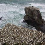 Costa del mar de Tasmania