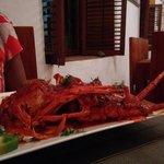Singi Irral - Langosta - Lobster