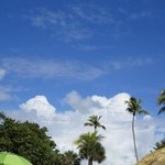 the view over umbrellas and trees