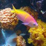 Wild Reef