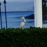 Just one of the amazing birds hanging around the pool