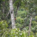 Pica-pau na árvore