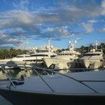 Marina full of fabulous yachts right next to Harborside