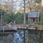 cute alligator enclosure