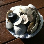 Sand dollars and rocks that our children collected from the beach.
