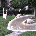 flamingos on the grounds
