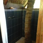 Coco tree in shower!