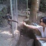 Feeding the monkey