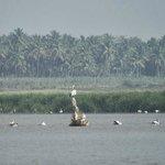Birds in Kanva