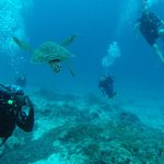 Diving off Mnemba Island