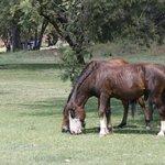 Horses abound
