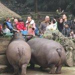 Feeding the hippos