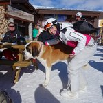 St Bernards pooch found at top of Funiculaire en route to Grand Motte