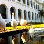 Ducks - In the morning