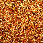 Variety of malted barley
