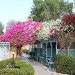 Blomstrende træer og buske over alt