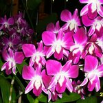 цветут орхидеи.. очень красиво...
