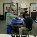turtle operating room