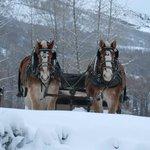 Sleigh horses.