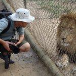 Lion at Moholoholo